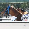 JRA激震「競走馬サプリメント」の機密実態(2)レース当日には「勝負飼葉」を