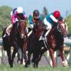 JRA激震「競走馬サプリメント」の機密実態(3)「競走馬用ポカリ」も存在する